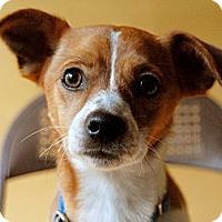 Adopt A Pet :: Jeremy - Milan, NY