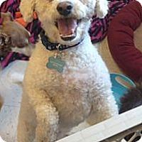 Adopt A Pet :: Harry - Oceanside, CA