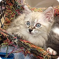 Adopt A Pet :: Gracie - Fort Lauderdale, FL