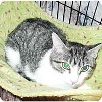 Adopt A Pet :: Lacey - Colmar, PA