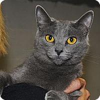 Adopt A Pet :: Rae - Monroe, GA