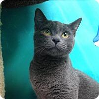 Adopt A Pet :: Jean - Newport Beach, CA