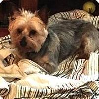 Adopt A Pet :: Hayley - Prole, IA