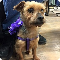 Adopt A Pet :: Sofia - Sinking Spring, PA