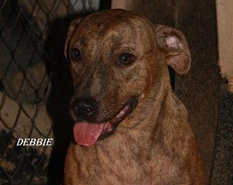 Catahoula Leopard Dog Mix Dog for adoption in Lone Oak, Texas - Debbie