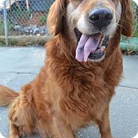 Adopt A Pet :: Duncan - Brattleboro, VT