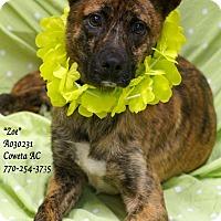 Adopt A Pet :: Zoe - Toms River, NJ