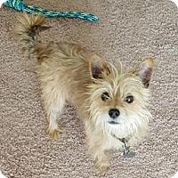 Adopt A Pet :: Blaze - Irmo, SC