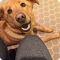 Adopt A Pet :: Sparkle - Nashville, TN