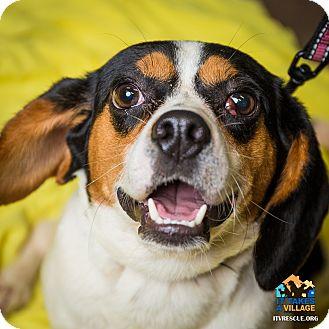 Dog Adoption In Evansville Indiana