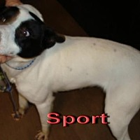 Terrier (Unknown Type, Medium) Mix Dog for adoption in Coleman, Texas - Sport