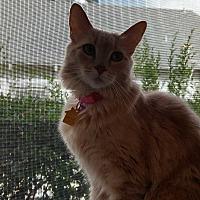 Adopt A Pet :: Ginger - Pasadena, CA