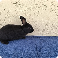 Adopt A Pet :: Elly - Bonita, CA