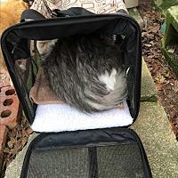 Adopt A Pet :: Toulouse - Panama City, FL