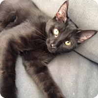 Adopt A Pet :: Melody - McHenry, IL