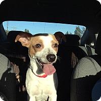 Adopt A Pet :: Bree - Encino, CA