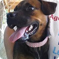 Adopt A Pet :: JASMINE - Jackson, MO