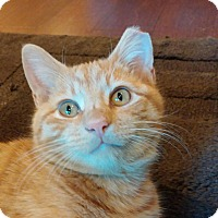 Adopt A Pet :: Willie - Cincinnati, OH