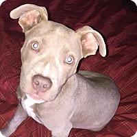 Adopt A Pet :: Callan - CUMMING, GA