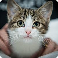 Adopt A Pet :: Sylvia - New York, NY
