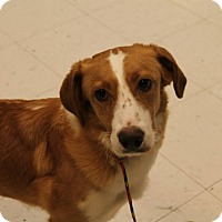 Adopt A Pet :: Dora - Pittsburg, KS