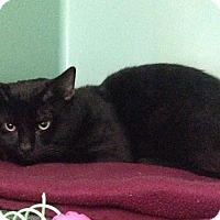 Adopt A Pet :: Xerlovph - Franklin, NH