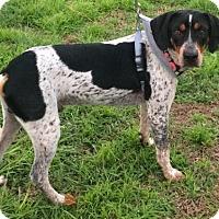 Adopt A Pet :: DALLAS - Fort Pierce, FL