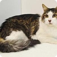 Adopt A Pet :: CARLTON - Sacramento, CA