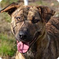 Adopt A Pet :: Lucy Goosey - Ridgeland, SC