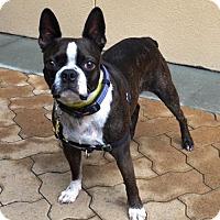 Adopt A Pet :: Mojo - Huntington Beach, CA
