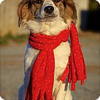 Adopt A Pet :: Taffy - Albany, NY