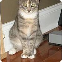 Adopt A Pet :: Penny - Barnegat, NJ