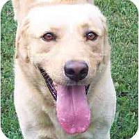 Adopt A Pet :: Emory - Cumming, GA