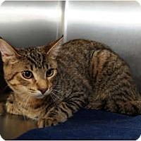 Adopt A Pet :: Stiles - Farmingdale, NY