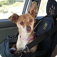 Adopt A Pet :: Sally - Vista, CA