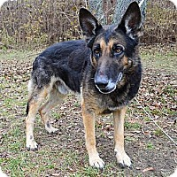 Adopt A Pet :: Rocky - Indianapolis, IN