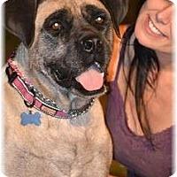 Adopt A Pet :: Mia - Phoenix, AZ