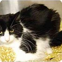 Adopt A Pet :: Bernie - Modesto, CA