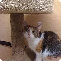 Adopt A Pet :: Julia - Monroe, GA