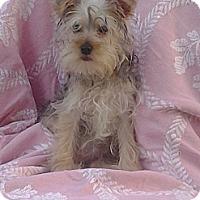 Adopt A Pet :: Kloe*ADOPTION PENDING* - Hollis, ME