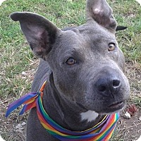 Adopt A Pet :: Mama Blue - Pompano Beach, FL