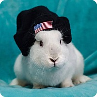 Adopt A Pet :: Timmy - Hillside, NJ