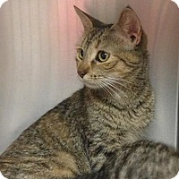 Adopt A Pet :: Sugar - East Brunswick, NJ