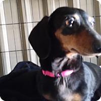 Adopt A Pet :: Princess - Lubbock, TX