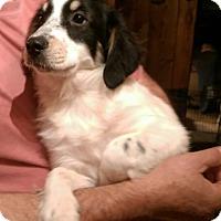 Adopt A Pet :: Riley - Charlestown, RI
