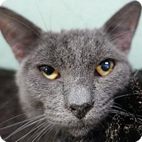 Adopt A Pet :: Oahu - Redwood City, CA