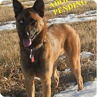 Adopt A Pet :: SKY - Winnipeg, MB