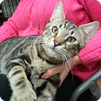 Adopt A Pet :: LM-Thorr - Broomall, PA