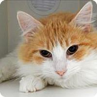 Adopt A Pet :: Rickman - Topeka, KS