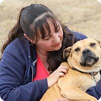 Adopt A Pet :: Mona ❤️ - Glastonbury, CT